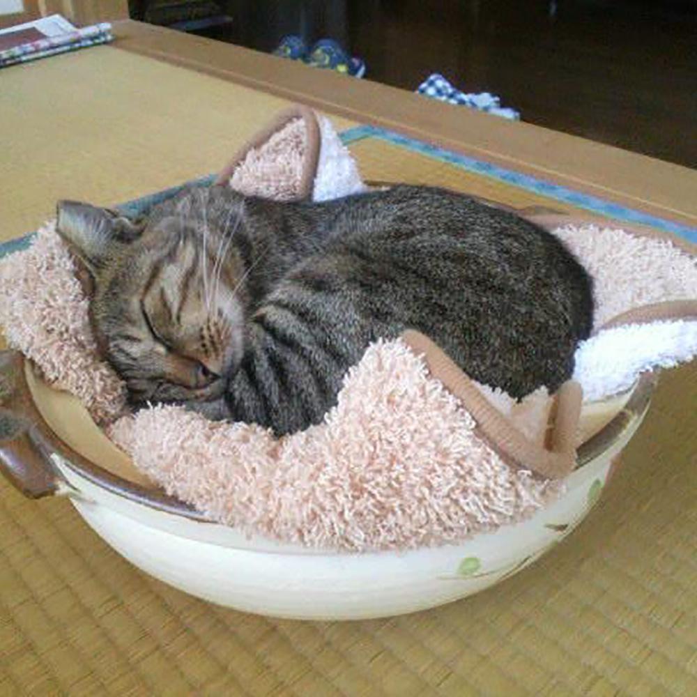 癒し効果バツグン!の愛猫'ミーちゃん'です